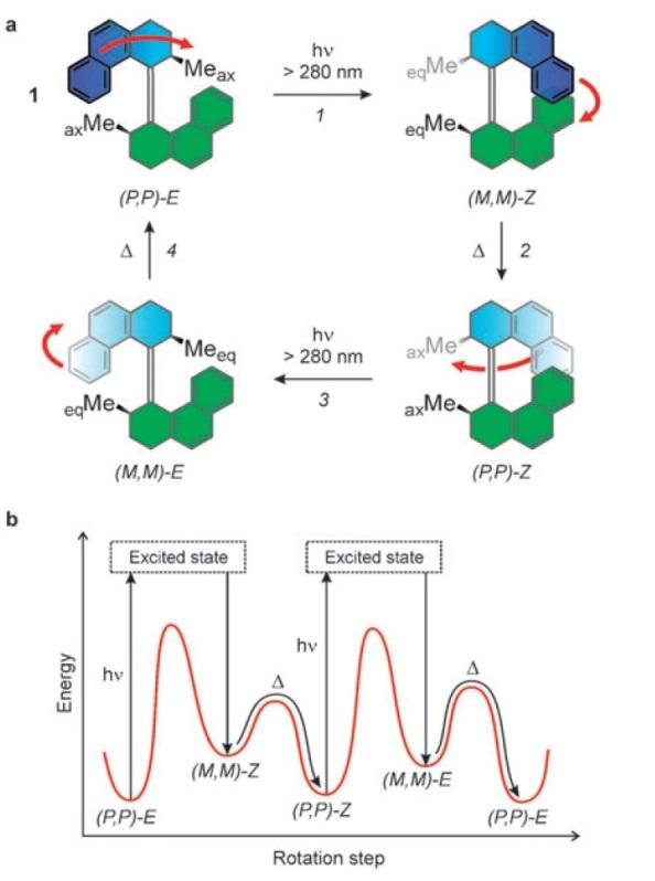 Figura 1. Molècula de bifenaltrilidè amb rotació unidireccional mitjançant 4 passos