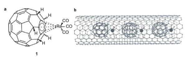 Figura 2. Els ful·lerens utilitzats per transportar àtoms de Re a l'interior del nanotub.