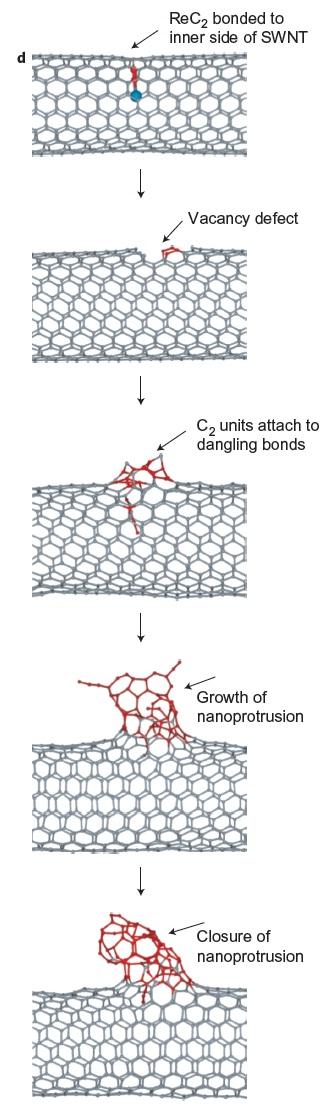 Figura 3. Procés de creació del gra al nanotub.