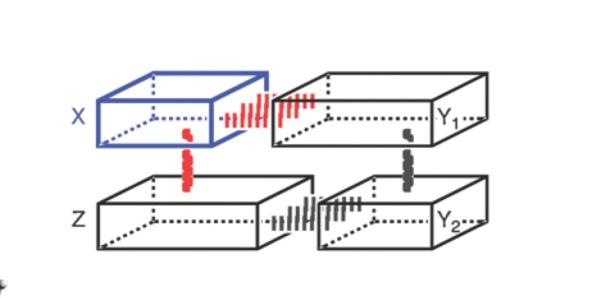 Template per la replicació d'ADN
