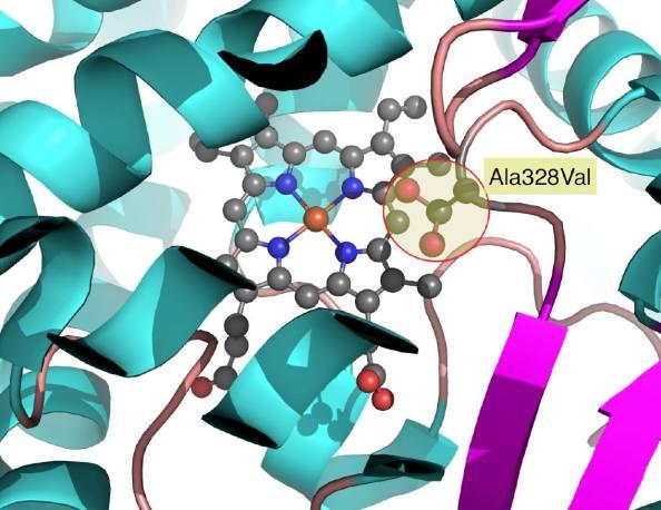 Mutació de Ala328 a Val328