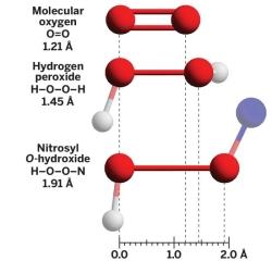 Figura 1. Comparació de les distàncies d'enllaç de l'O2, HOOH i HOON.